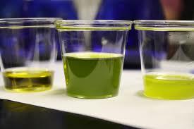 I cuochi giapponesi a scuola di olio extravergine d'oliva italiano