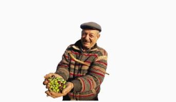 Olio Extravergine di Oliva: Come venderlo Online