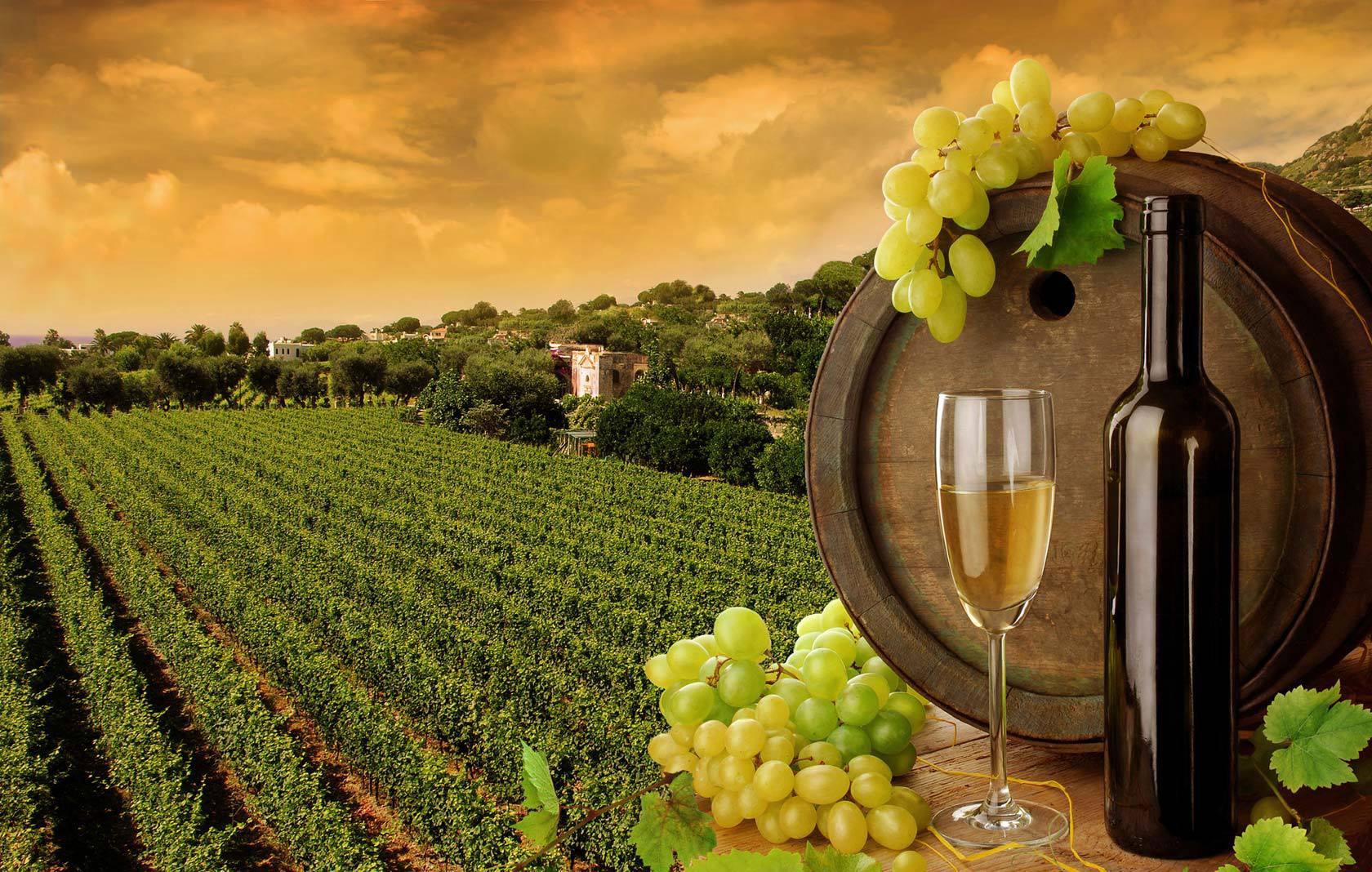 11838709_966132160113671_621861280435900733_o Vino Online: Chi Riesce a Vendere Vino Online [Statistiche]
