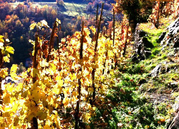 Dolcepiemonte – Prodotti Tipici Piemontesi